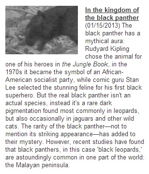 mongabay panther