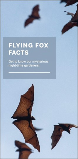 Flying Fox Factsheet_web_outlined